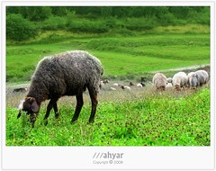 There Was A Big Family # 4 (///ahyar) Tags: family wallpaper color green nature colors canon landscape photography was landscapes persian big paradise iran 4 picture gathering there  natures likeness gorgan  golestan  mahyar a  seyfi s5is   gosfand