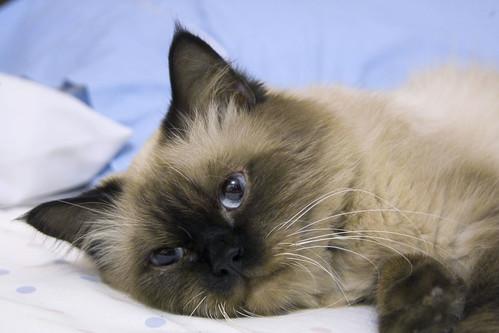 Cat Vomiting Food And Clear Liquid