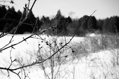 cooled days in waiting (emilyclaire.) Tags: winter berries frozenlake