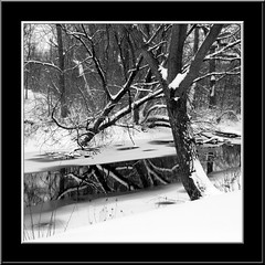 Just Another B/W Winter Shot (Theresa*) Tags: trees winter blackandwhite bw snow reflections wetreflections wateroceanslakesriverscreeks treepics flickrnature
