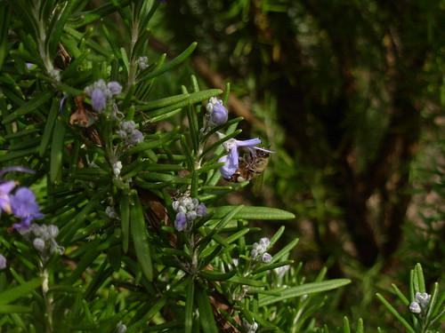 garden 2009 013