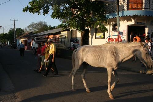 Horse at large on Isla Ometepe, Nicaragua...