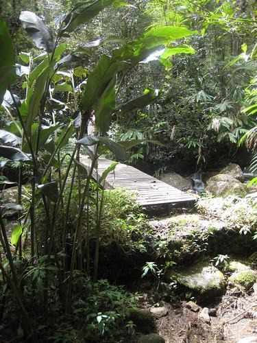 Nature trail at Mesilau