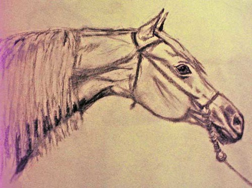 Arabian Horse. Charcoal Drawing and Photo: Ulla Hennig