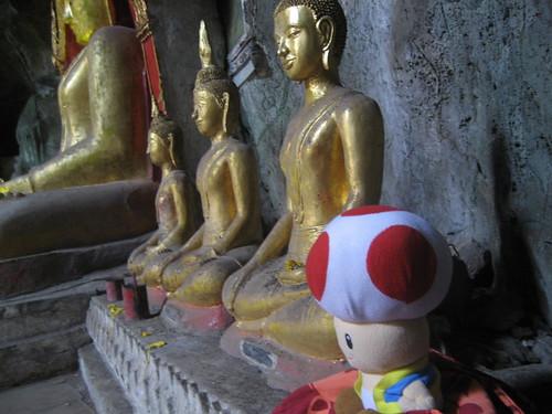 Toad sits like a Buddha