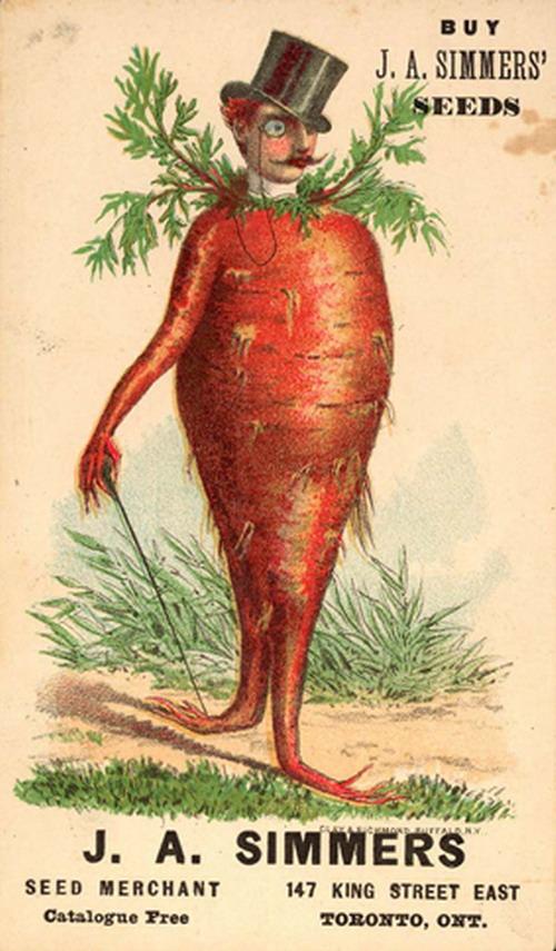 Mr Carrot