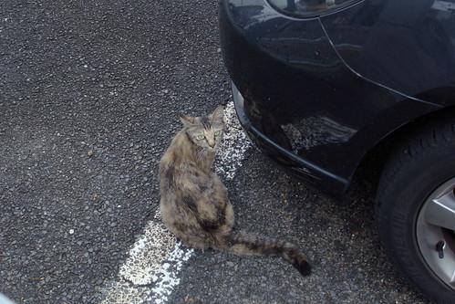 Today's Cat@20090717