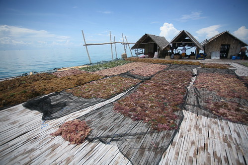 seaweed being dried at Pimpi's Hingutanan platform