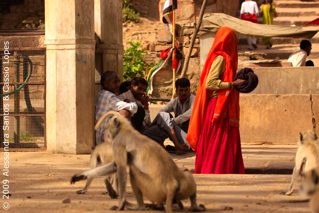 Langurs at the Temple
