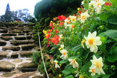 Flower garden (Pkamo@Tai) Tags: trip travel flowers red green nature beautiful thailand stair tour fresh step thai chiangmai  puykamo bhubingpalace