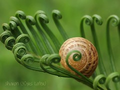 """...how symmetrical and unique"" for Machel (30 years later) Tags: green you snail houston curls symmetry thank much fp frontpage sago sagopalm houstontx explorefrontpage cmwdgreen 30yrslater gorgeousgreenthursday bokehmasters winksplace sharon30yrslater formachel firstfp explore163thankyou"