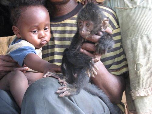 baby black mangabey helps stop tears