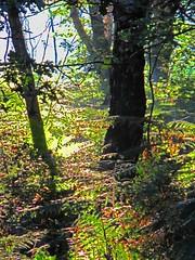 IMG_3622 (Stephen R. Sizer) Tags: autumn sunrise wentworth autumnal cobwebs morningmist virginiawater