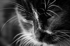 Lucy (Tor Even Mathisen) Tags: lucy tilfotoramme lucyfotostudio