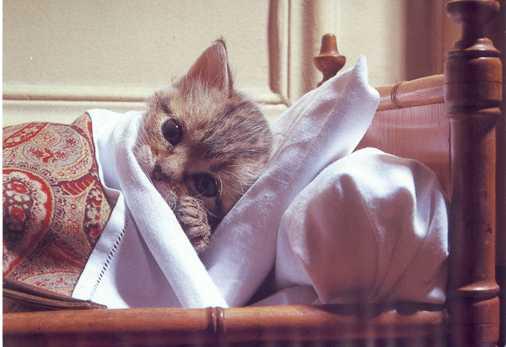 sick_cat_1