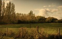 23357 - Autumn Sunshine (M R Fletcher) Tags: autumn light sunshine soft stockton teesside prestonpark autumnal markfletcher eaglescliffe