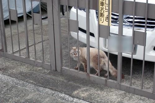 Today's Cat@20091011