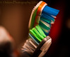 Brushes for your teeth (13skies) Tags: colour macro teeth dental brush brushing clean toothpaste cavity toothbrush hygeine macromondays