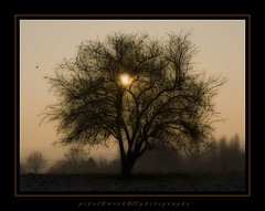 ...in the evening... (oliver's | photography) Tags: trees friends light tree nature photoshop canon eos evening flickr raw image awesome  adobe frame dslr soe awesomepicture copyrighted blueribbonwinner supershot pixelwork photographyrocks abigfave platinumphoto anawesomeshot diamondclassphotographer canoneos450d theunforgettablepictures goldstaraward thebestofday rubyphotographer flickrlovers photographersgonewild paololivornosfriends doubledragonawards dragondaggerphoto oneofmypics sigma70200mmex28dgmacrohsmii pixelworkphotography flickraward oliverhoell theacademytreealley allphotoscopyrighted