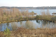 lake and birches (Ren Mouton) Tags: winter lake water d50 frozen nikon meer bevroren hiking nederland thenetherlands nikond50 birches limburg wandeling berken reindersmeer 27122008
