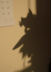Strange shadows on the wall - 2