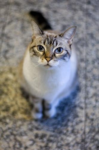 Escolher sempre um chão para a cozinha que dê bem com o gato!