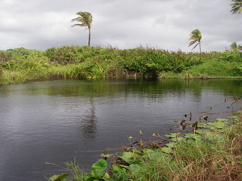 Nariva River