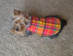 puppy coat