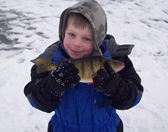 darling perch (Paul Schumann) Tags: lake ice fishing perch darling walleye schumann