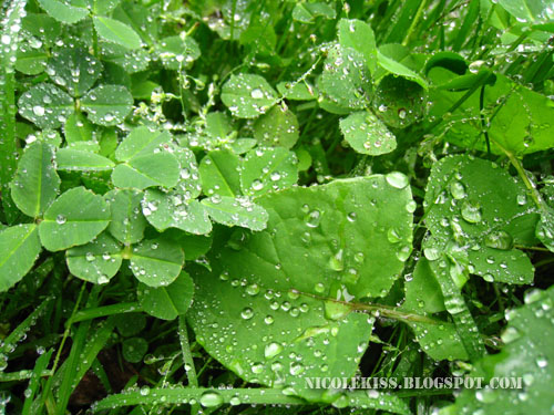 droplets and leaves