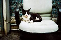 () Tags: cat   apotar   agfaoptima500sensor