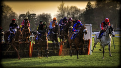 A Day At The Races (strussler) Tags: england horses race photoshop canon lens eos focus soft colours westsussex sigma dirty apo adobe jockeys 5d horseracing racecourse lightroom silks hurdle 70300 cs3 photomatix tonemapped nationalhunt fontwellpark
