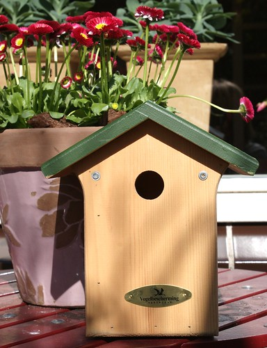 new bird house