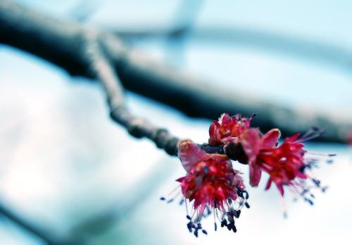 Spring Awakening 05
