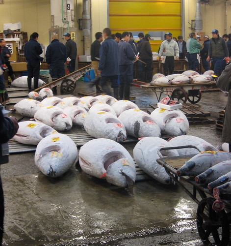 Tuna Auction at Tsujiki Fish Market