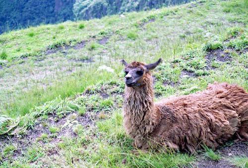 Machu Pichu by Ik T