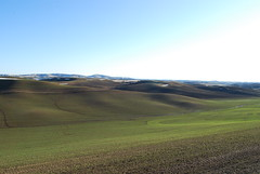 Palouse hills in spring