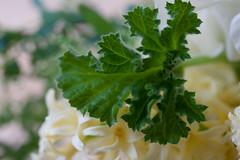 0903 bouquets #7