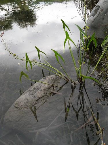 你拍攝的 54水生植物。