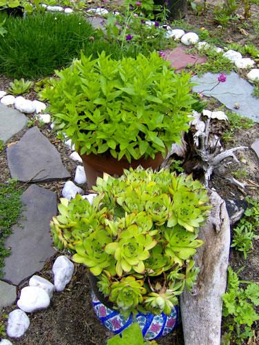 Abundance (spiral garden)