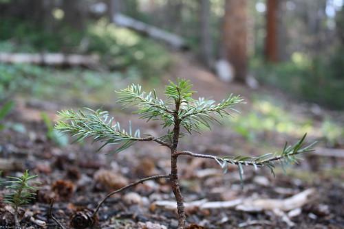 A Little Tree Nubbin.