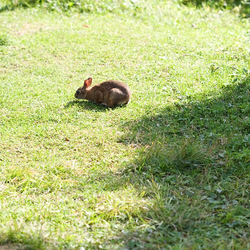 Rabbit #5