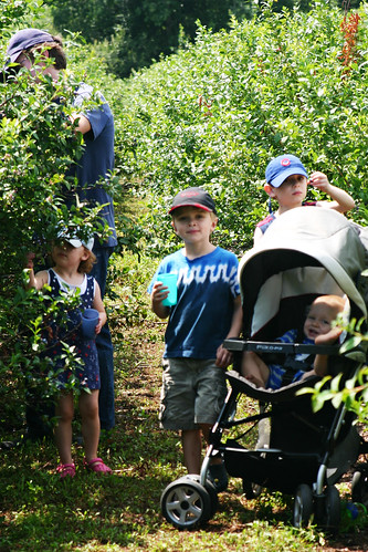 Blueberries 09_edited-1