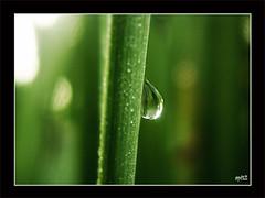 Siapalah aku (apit_2) Tags: 2 macro green water closeup kodak droplet hijau pagi kedah serai embun apit changlun c713 aqrab