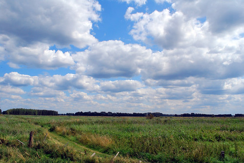 Lakenheath Fen RSPB