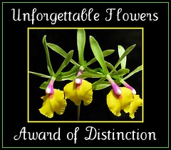 Unforgettable Flowers 8+ Award