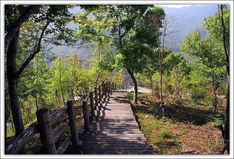 里佳部落楓林步道