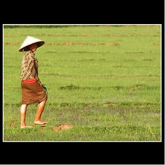 'LAO RICE' (cisco ) Tags: portrait verde green rice explore cisco laos frontpage ritratto soe riso donkhong champasak siphandon photographia artofimages photographia saariysqualitypictures bestportraitsaoi