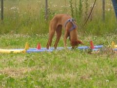 Schnappschsse Trainingsgruppe (Cave Cani) Tags: hunde hundeschule suchspiel hundetraining trainingsgruppe hundeerziehung