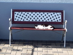 On the bench (Esther Molin) Tags: pet animal cat bench feline catnipaddicts